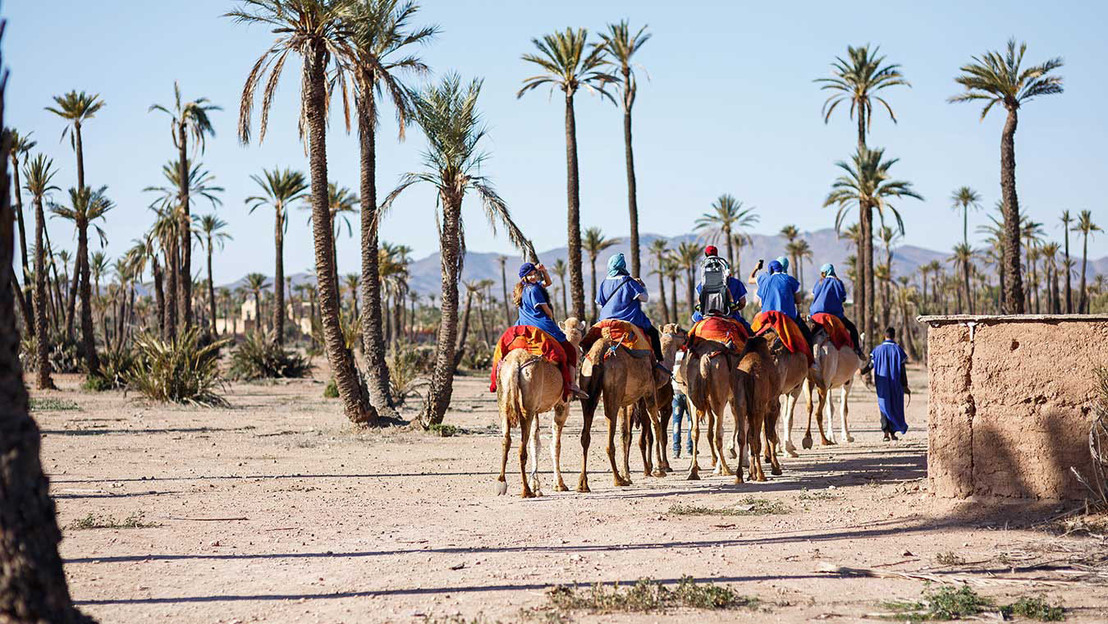 Marrakech Camel Ride In The Palm Grouve