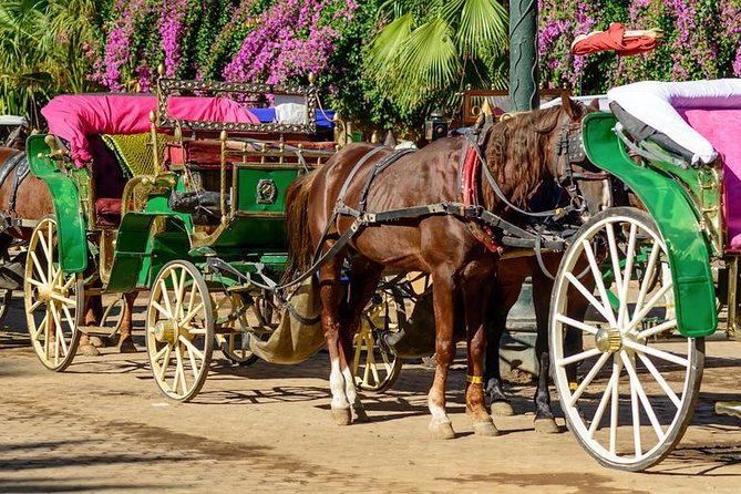 Carriage ride in Marrakech